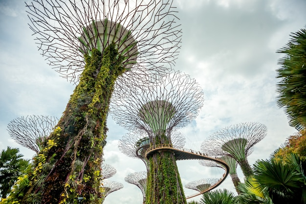Singapore supertrees in garden by the bay