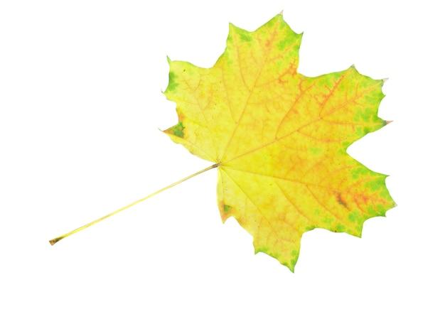 白の上の単一の秋の葉。白で隔離