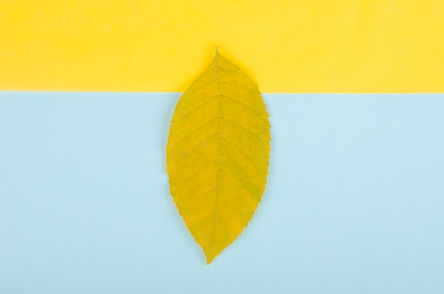 Single autumn leaf on a yellow and blue paper background, minimal concept