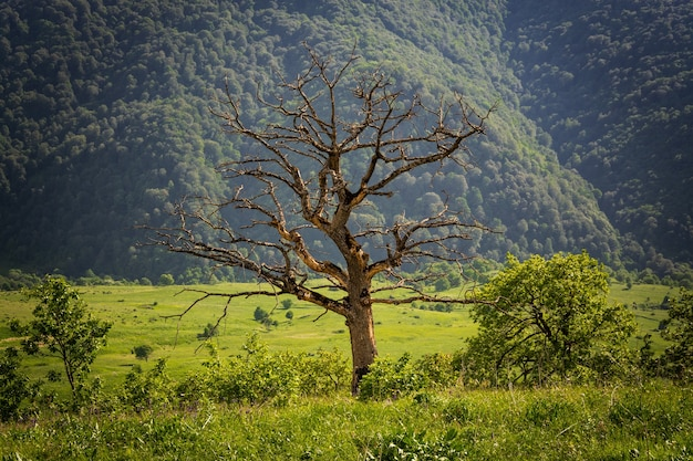 Single bare tree in a green meadow with forested mountains in the surface