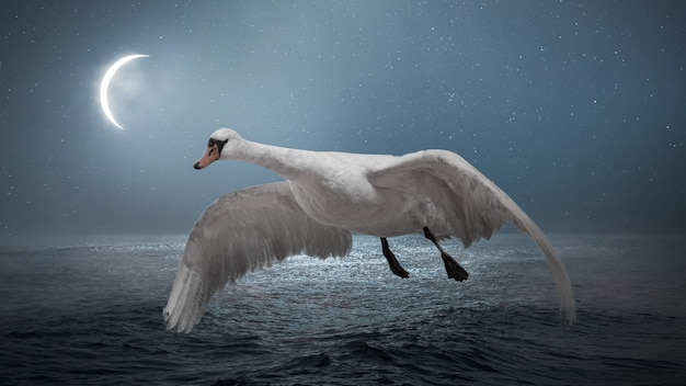 밤에 하나의 아름다운 날아다니는 하얀 백조