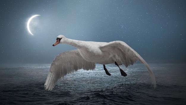 Single beautiful flying white swan at night