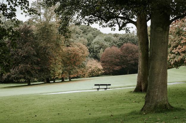 Одиночная скамейка в парке рядом с деревом