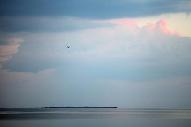 단일 새와 일몰 바다 해안 풍경입니다. 도시 바다 해안 일몰 파노라마입니다. 일몰 시 바다 해안 보기입니다. 일몰 바다 해안 파노라마입니다. 저녁 강 풍경