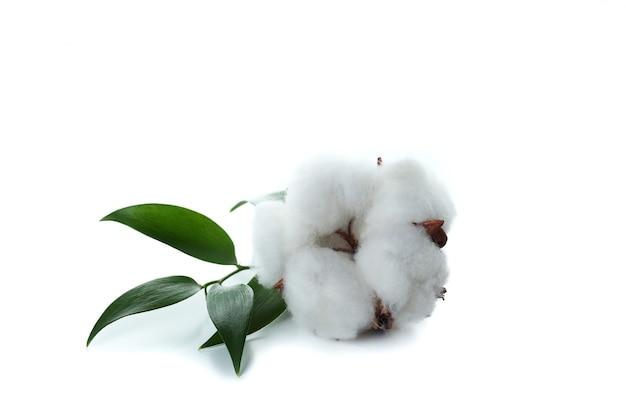 Один цветок хлопка, изолированные на белой поверхности