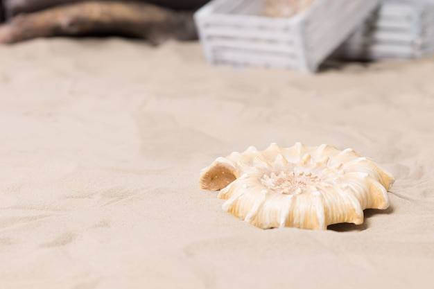 Одиночная декоративная спиральная морская раковина, лежащая на песке пляжа, на выставке в морской или морской тематике или на выставке с copyspace со старыми белыми деревянными ящиками на заднем плане