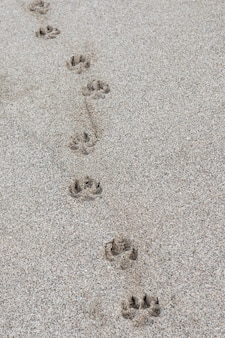 Single dog paw print in the sand