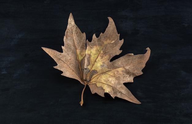 검은 테이블에 단일 말린 잎입니다.