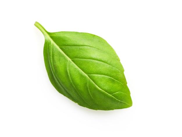 Single fresh basil leaf isolated on white.
