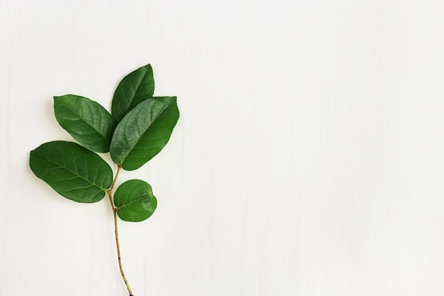 Single green twig with beautiful leaves, minimalistic natural eco concept