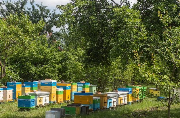 養蜂場の単一の殻と複数の殻の巣箱。ミツバチは夏の蜂蜜の収穫時に巣箱に戻ります。