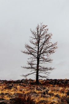 Single isolated leafless tree in a field