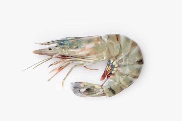 Single jumbo size raw shrimp on a minimalist white surface