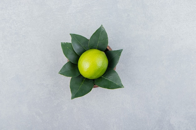 Single lime with leaves in wooden bowl.