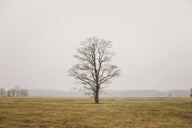 A single lonely tree in a field in foggy field and grey sky