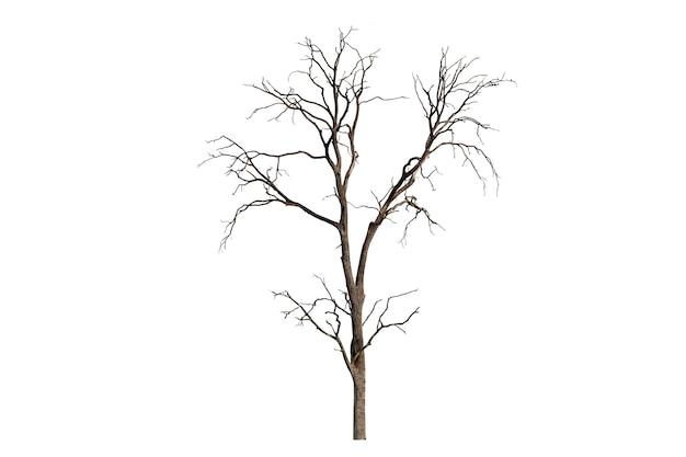 Одно старое и мертвое дерево, изолированные на белом фоне