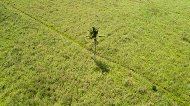 Single palm tree in the middle of a flat field on an island