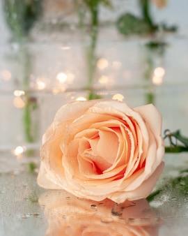 水滴のある単一の桃のバラは、濡れた鏡の上にあります