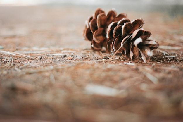 Single pine cone on an autumn blurred surface