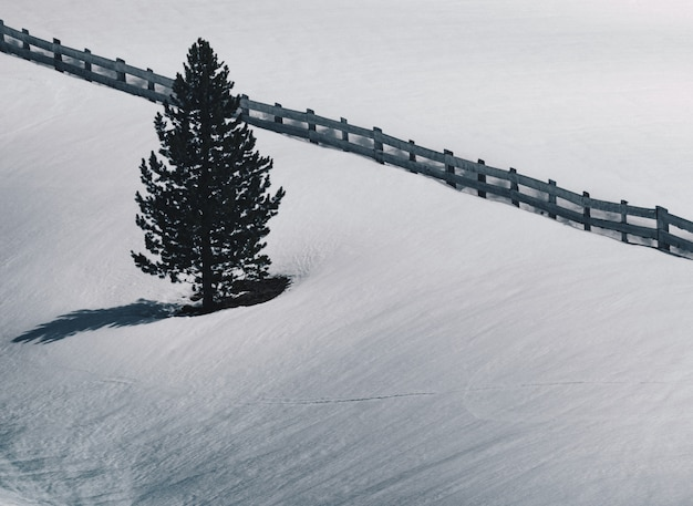 Single pine tree next to a wooden fence in a snow covered field