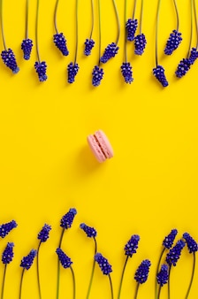 Single pink macaroon and blue muscari flowers on yellow background.overhead shot. flat lay. vertical frame composition