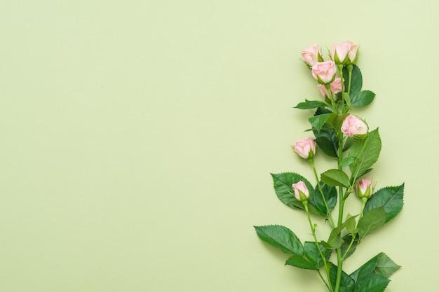 Одиночный стебель розовой розы. концепция цветочной природы. скопируйте пространство на зеленом фоне. плоская планировка.