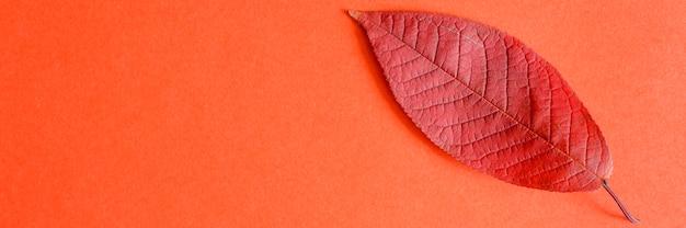 赤い紙の背景に単一の赤い落ちた秋の桜の葉。フラットレイ、テキスト用のスペース。