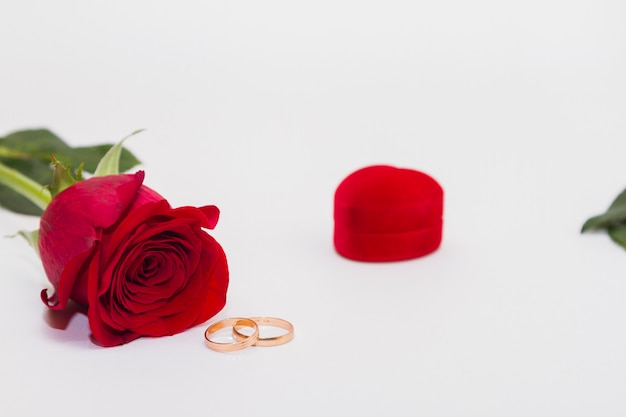 Single red flower rose lay on white background