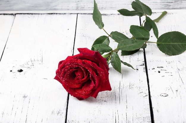 Single red rose water drops
