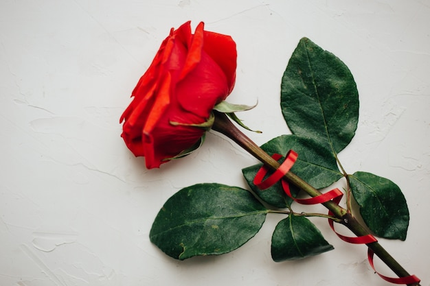 Single red rose with red ribbon on white plastered background