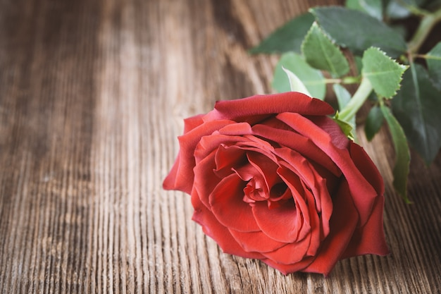 Single red rose on wood