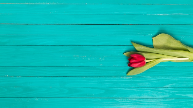 Single red tulip flower with green leafs on wooden textured backdrop