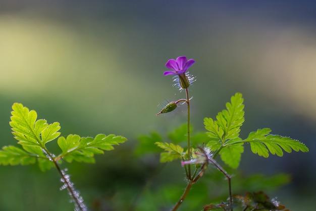 Один маленький фиолетовый цветок, растущий на зеленом листе