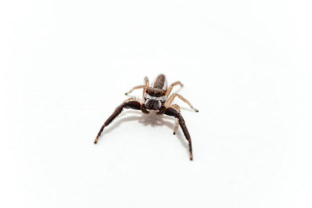 Single spider isolated