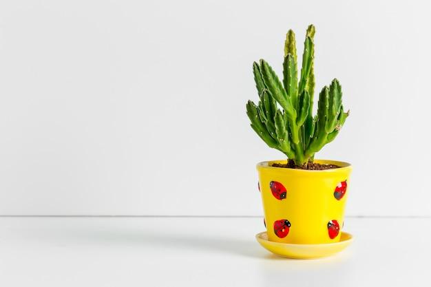 A single succulent plant potted
