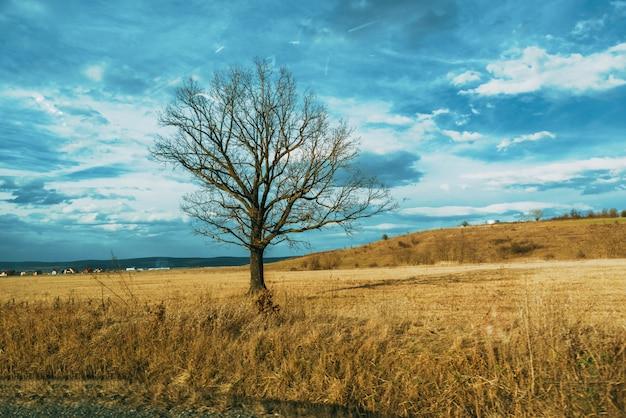 Single tree on a field near a small village. great blue sky.