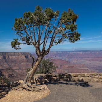협곡의 놀라운 전망과 함께 가장자리에서 자라는 단일 나무