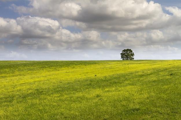 낮 동안 하얀 솜털 구름 아래 아름답고 큰 녹색 필드에 단일 트리