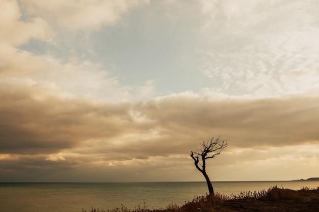 ウクライナの海の近くの一本の木。山は草で覆われ、海からの断崖があります。