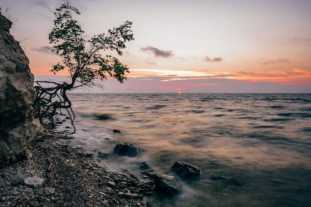夏の日の出の岩の多い海岸に一本の木