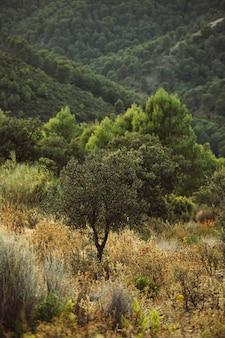 森の真ん中で撮影した単一のツリー