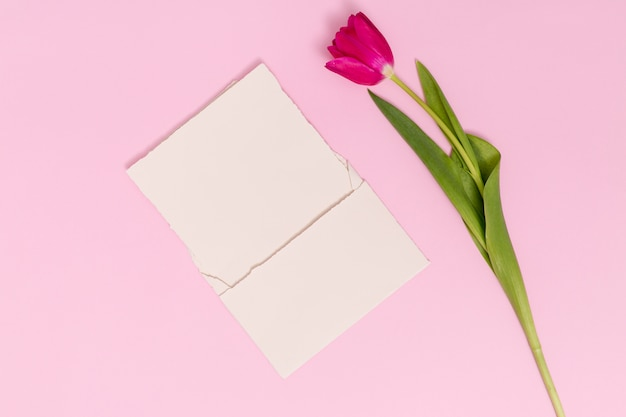 Single tulip flower with blank card against pink background