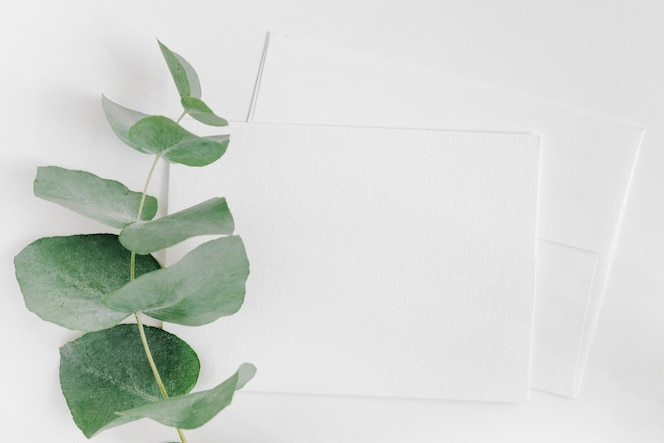 Single twig over the two envelope on white backdrop
