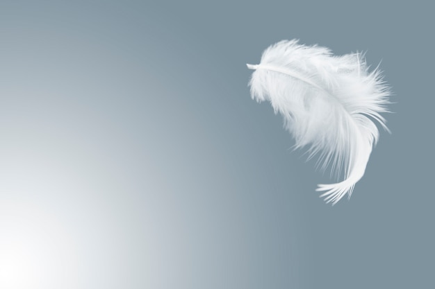 Single white bird feather float in the air.