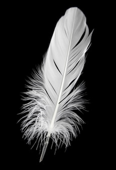 Single white feather isolated on black background.