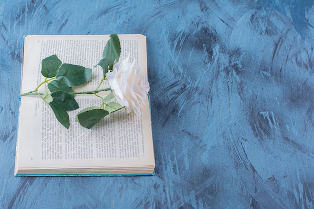 Single white rose placed on top of open book on blue.