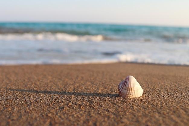 Одна белая ракушка на песчаном пляже крупным планом концепция летних пляжных каникул
