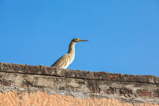 Single white stork