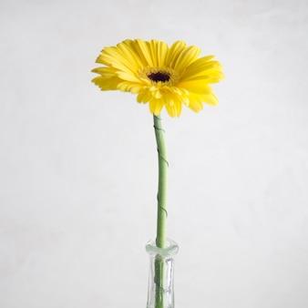 Single yellow flower in vase