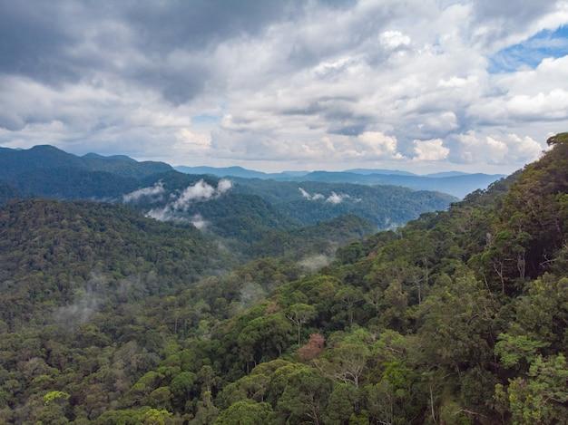 Sinharaja 열대 우림 자연 보호구 일몰 산 정글 고대 숲에서 스리랑카 공중보기